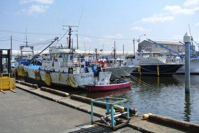 行ってきました、船橋漁港